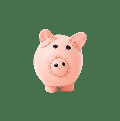 afforable pig