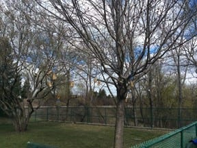 outdoor earthday art at preschool